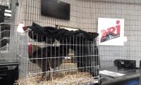 Cocowiko : après l'éthique marketing, l'éthique animale