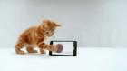 Deux nouvelles publicités pour le Samsung Galaxy S II avec un chat et homme habile avec ses doigts