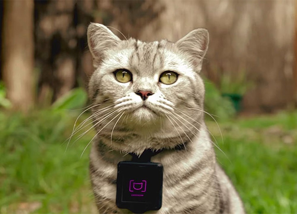 Catstacam transforme votre chat en action cam (et potentiellement en star d'Instagram)