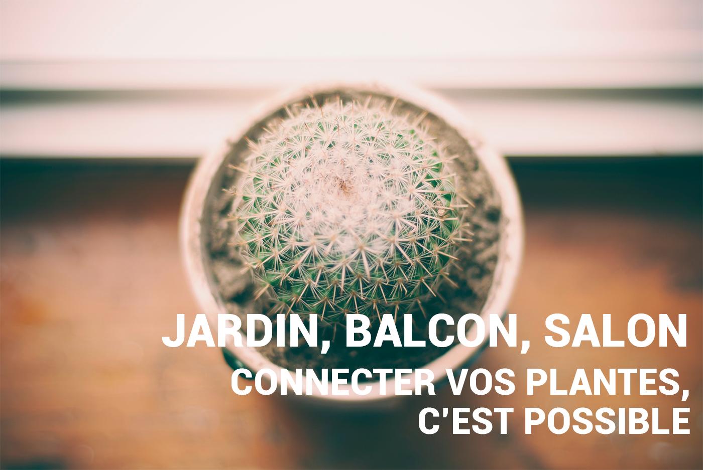 Jardin, salon, balcon : les objets connectés au service des plantes
