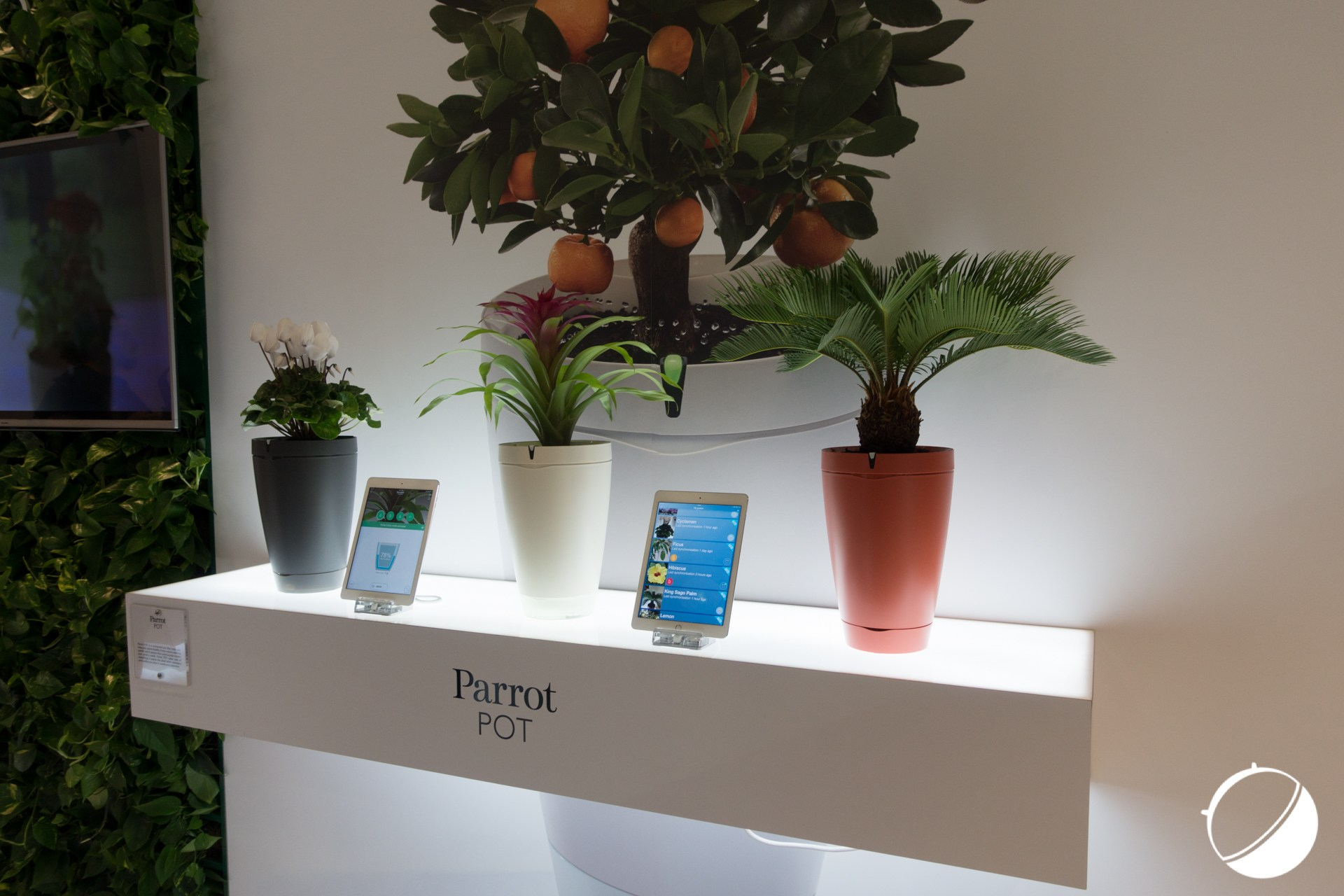 IFA 2016 : 1 an et 9 mois plus tard, Parrot commercialise enfin son Pot