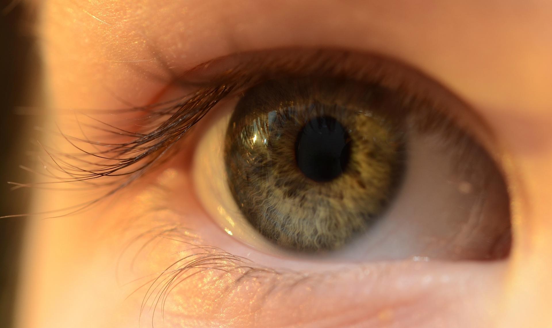 L'intelligence artificielle de Google peut éviter la perte de vue provoquée par le diabète