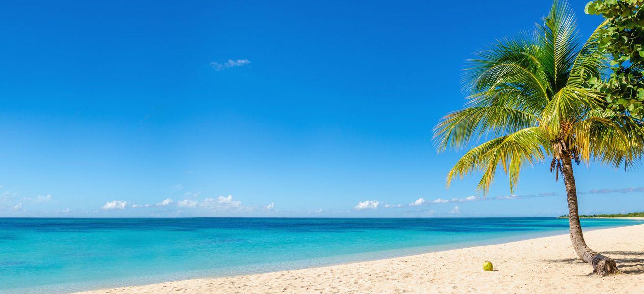 Free Mobile va débarquer à Mayotte et à la Réunion, puis ensuite aux Antilles et en Guyane