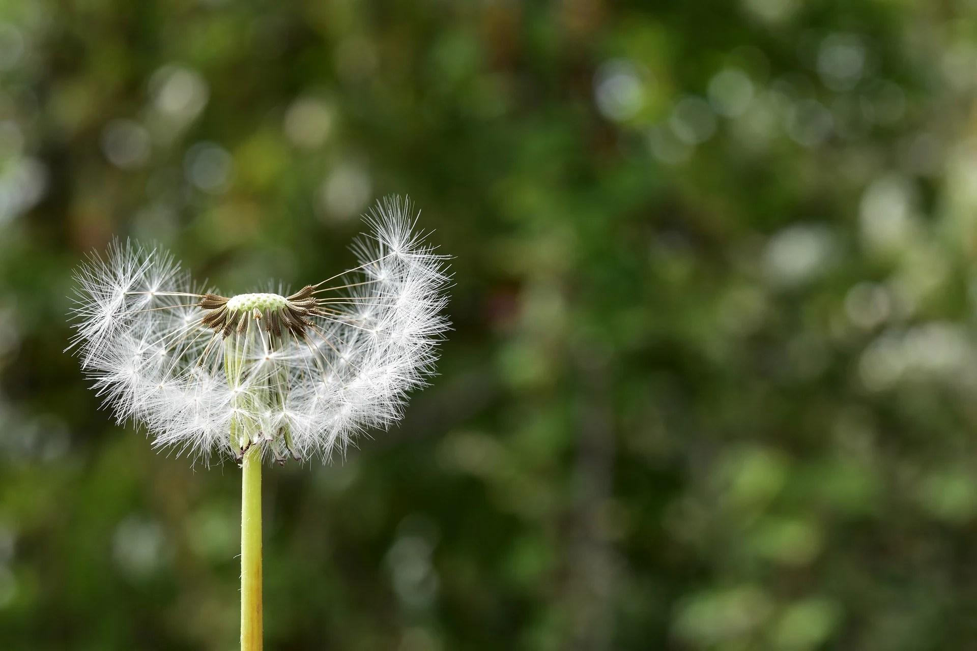 Allergies au pollen: les 2 meilleures applications pour s'en prémunir