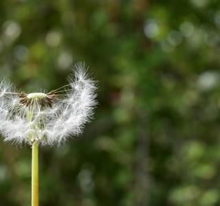 Allergies au pollen : les 2 meilleures applications pour s'en prémunir