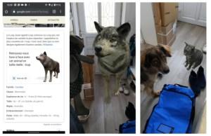 Une simple recherche sur Google fait apparaître des animaux 3D en taille réelle