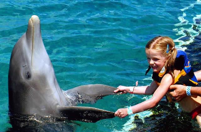 dauphin violeur