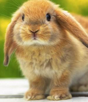 cute-show-lapins