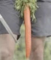 peta-legumes-vegan-performance-sexuelle-180×124