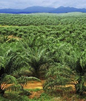 arreter-huile-de-palme