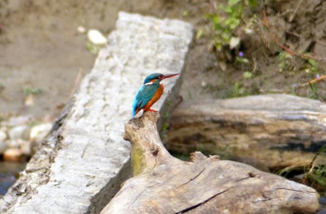 carte-postale-nepal-parc-bardia