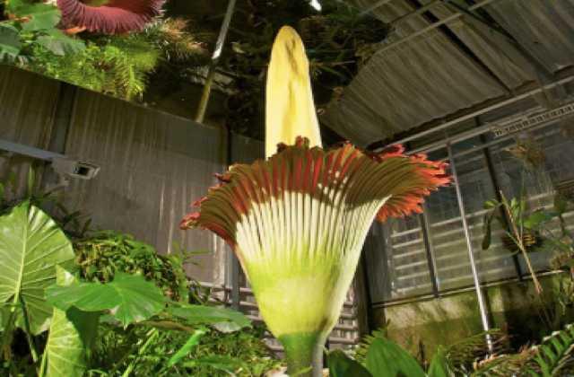 trois-plantes-etranges
