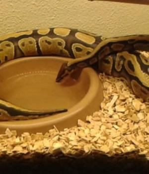 elever-serpents-temoignage