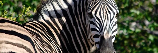 bleu-blanc-zebres-politiques