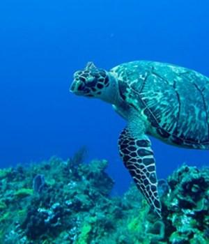 oceans-plastique-pollution