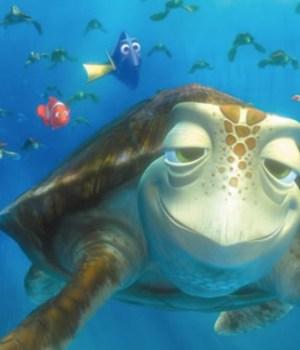 wwf-corail-tortue