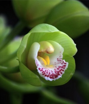 presenter-plantes