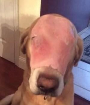 chien-jambon-compassion-troll
