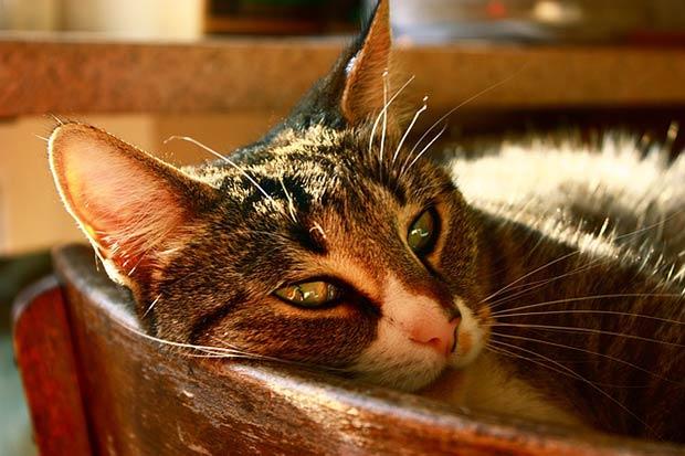 sapin-noel-chat-sieste