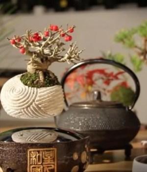 bonsai-flottant-deco