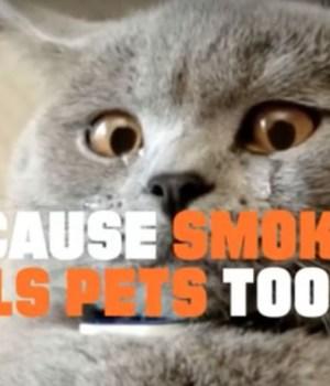 campagne-anti-tabac-lolcat