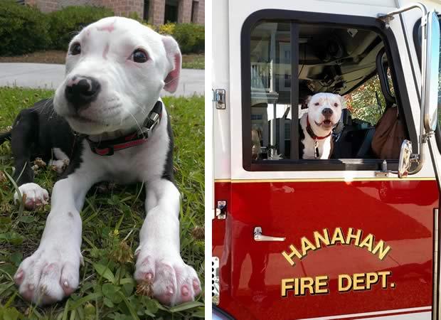 chien-pompier