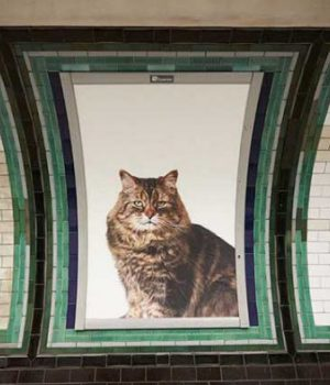 chats-pubs-metro-londonien