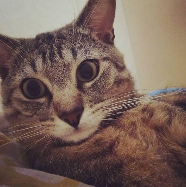 Un chat aux pupilles dilatées.