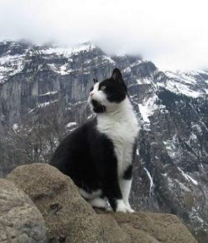 chat-sauveteur-alpes