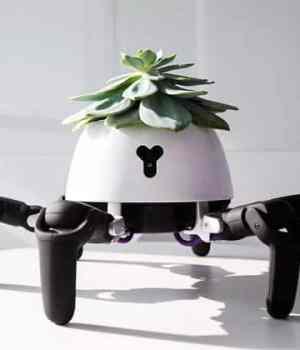 robot-plante-soleil