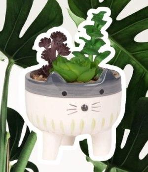 plantes-faciles-entretien