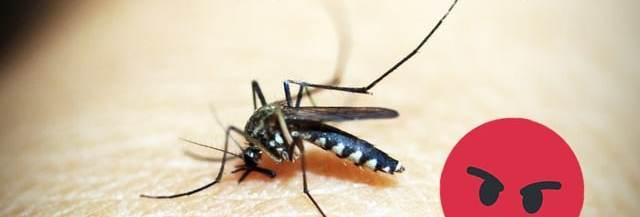 techniques pour repousser les moustiques
