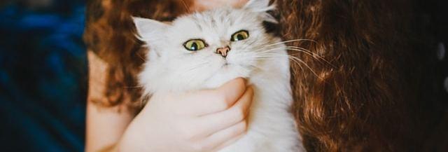 chat-aime-maitre