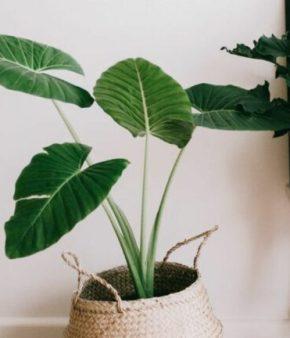 plantes-interieur