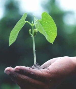 plante-main-enfant-600