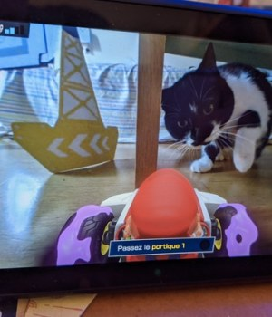 mario-kart-home-circuit-chat-petit-appartement