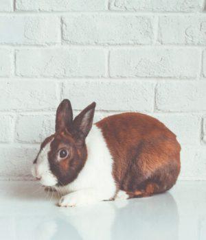 la-chine-arrete-les-tests-sur-les-animaux-pour-les-produits-importes