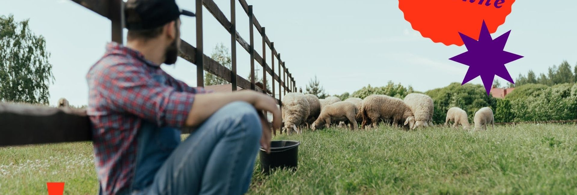 homme-campagne-moutons