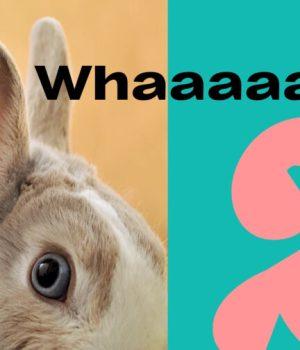 lapin rabbit test