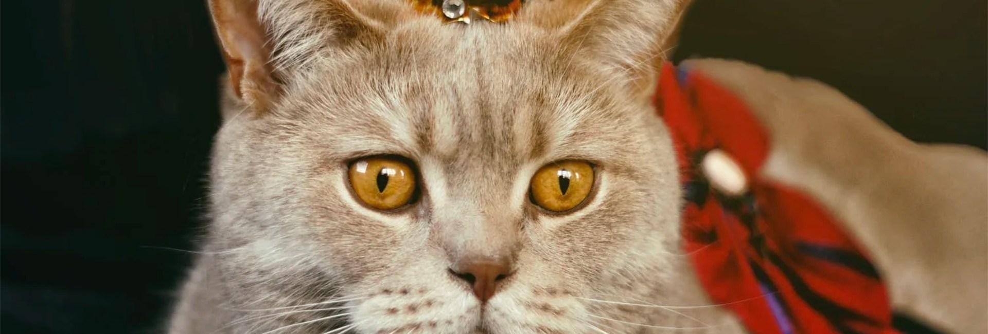 Un chat portant une petite couronne