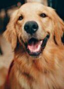 pexels-helena-lopes-chien loi maltraitance animale
